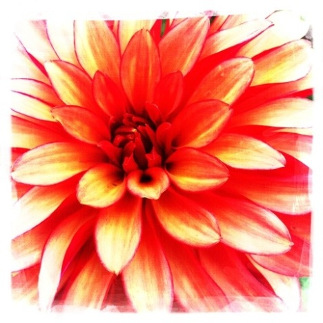 20110915-010733.jpg